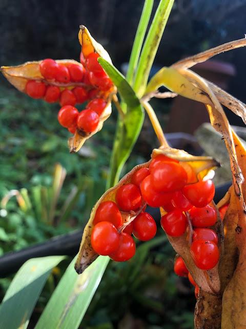 autumn garden, Chez Maximka
