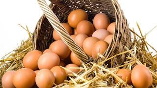 organik yumurta nasıl anlaşılır - KahveKafeNet