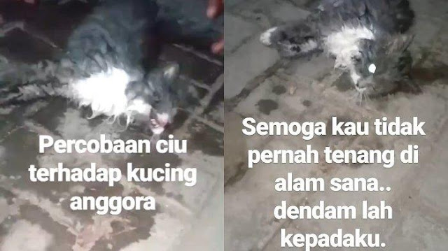 Viral Video Kucing Anggora Dicekoki Ciu sampai Mati, Polisi Yogya Turun Tangan