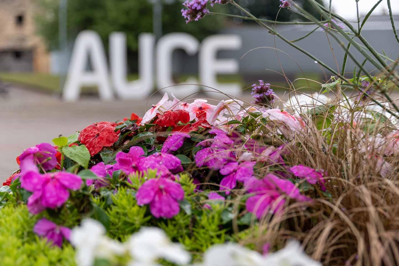 Auce - pilsētas nosaukums
