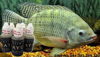 Umpan Untuk Ikan Nila Indukan Master Essen Katilayu