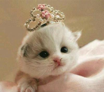 صور صور قطط كيوت 2020 خلفيات قطط جميلة جدا 1533739903281.jpg