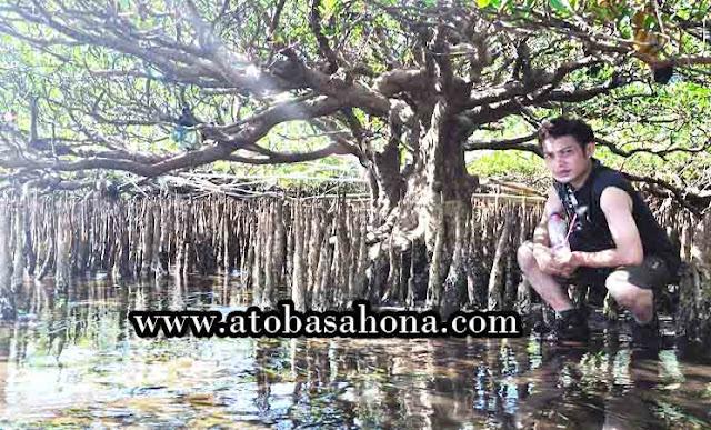 Pengertian, 23 Fungsi dan Manfaat, Zonasi serta Penyebaran Hutan Mangrove di Indonesia