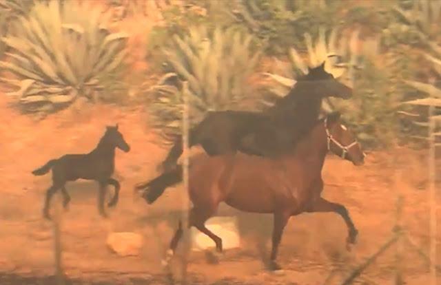 حصان يقتحم حريقا هائلا لإنقاذ أسرته في مشهد بطولي| فيديو