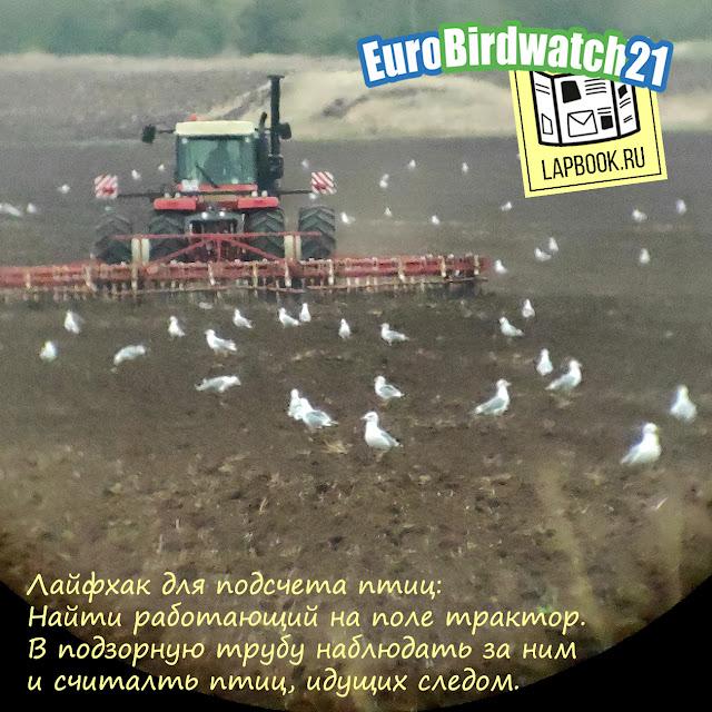 как участовать в Евразийском учете птиц Eurobirdwatch 2021