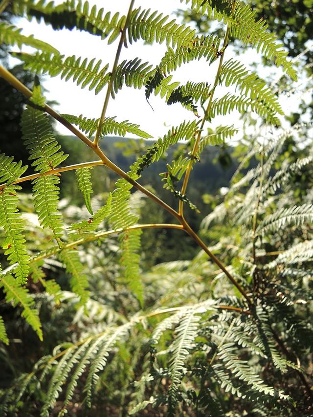 Eupen: een wandeling tussen de dennenbomen