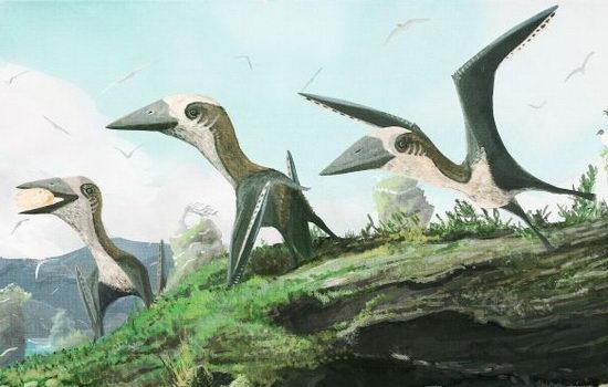 Laporan Penelitian Tidak Semua Pterosaurus Raksasa, Temuan Baru Bahkan Lebih Kecil dari Kucing