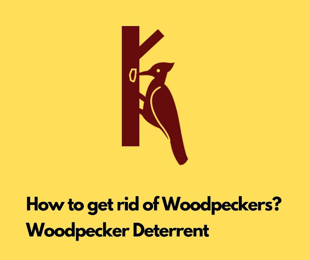 How to get rid of Woodpeckers? Woodpecker Deterrent