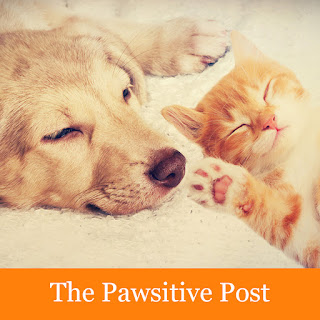 The Pawsitive Post byline with a sleeping dog and cat