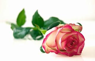 kumpulan puisi tentang bunga