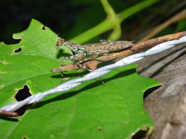 SNOMNH Recent Invertebrates: 2012