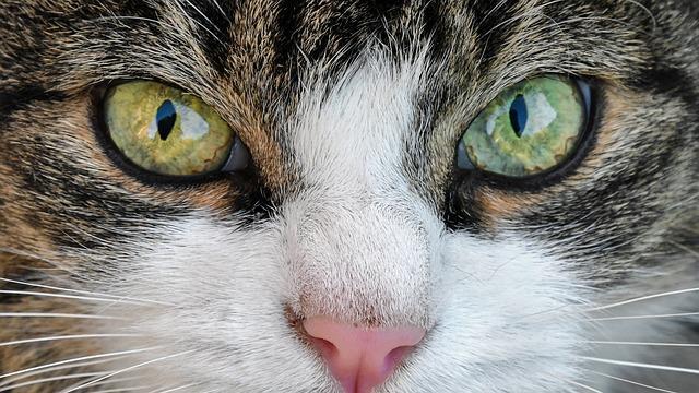 8 Bau Yang Tidak Disukai Kucing