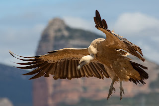 Hope in the LORD and Soar on High Like a Vulture