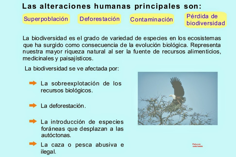 http://recursostic.educacion.es/secundaria/edad/4esobiologia/4quincena12/imagenes12/altera_humana.swf