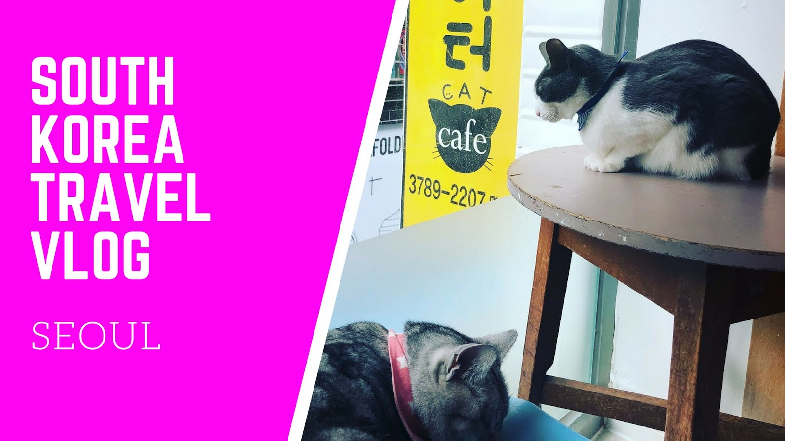 diva makeup queen: seoul korea travel vlog (shopping, cat cafe