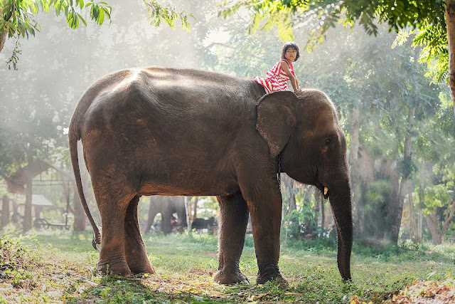 Play With Elephants in Laos