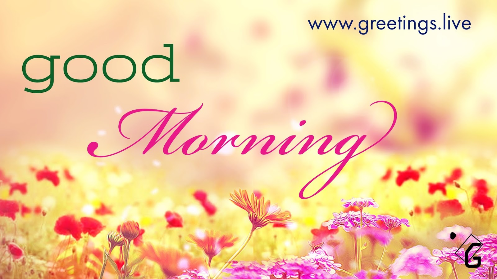 Greetingsve hd images love smile birthday wishes free download beautiful flowers bg early morning greetings kristyandbryce Image collections