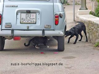 Hund und Katze Foto von Stampin' Up! Demonstratorin in Coburg