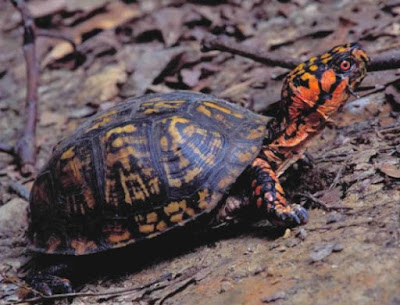 Turtles are surprising marvels of design engineering from their Master Architect.