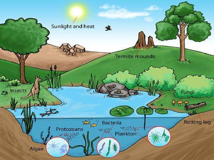 the daily science chronical abiotic and biotic factors