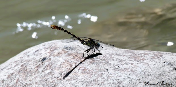 Bolognano, fiume Orta, fauna
