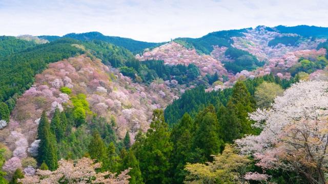 ศาลเจ้าโยชิมิสึ (Yoshimizu Shrine: 吉水神社) @ www.nippon.com