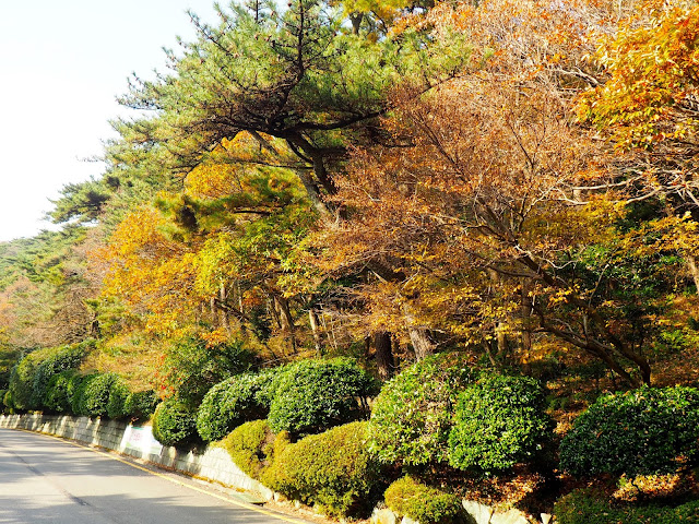 Autumn foliage in Taejongdae Park, Busan, South Korea