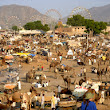 Dates Of Pushkar Fair, Pushkar Fair 2013, Camel Fair Pushkar