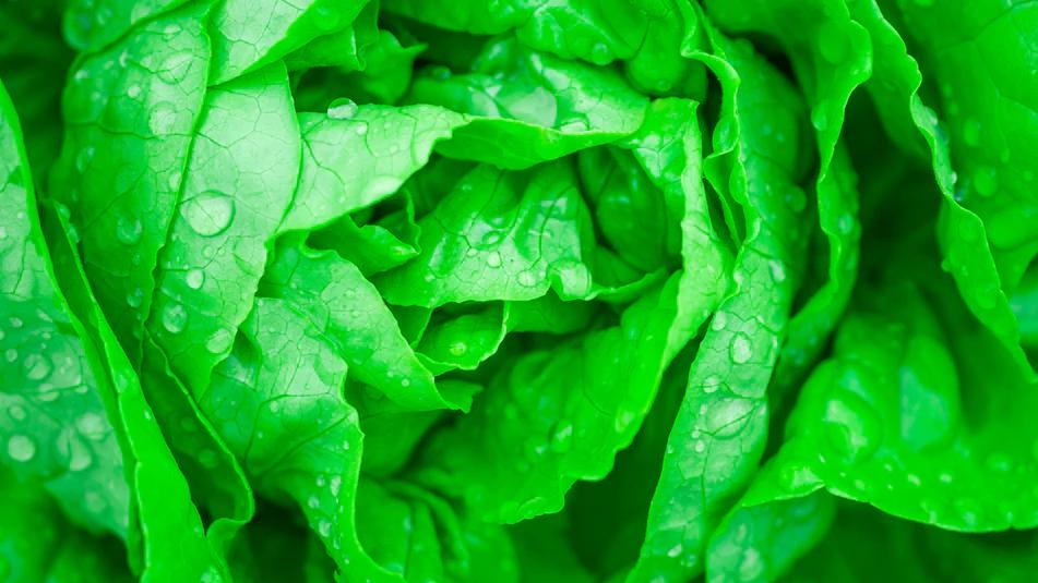 Thực phẩm trữ trong Tủ lạnh Electrolux ETB2502J-A: Tươi. Ngon. Giàu dinh dưỡng