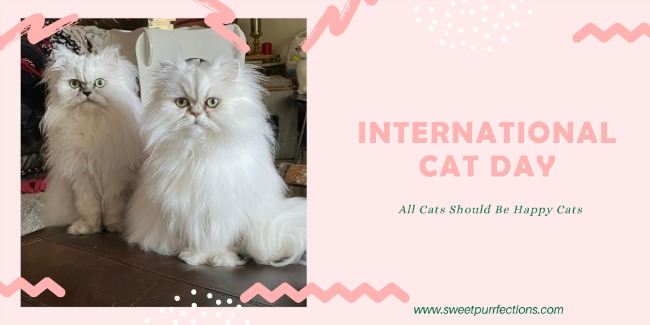 Two silver shaded Persians_International Cat Day graphic
