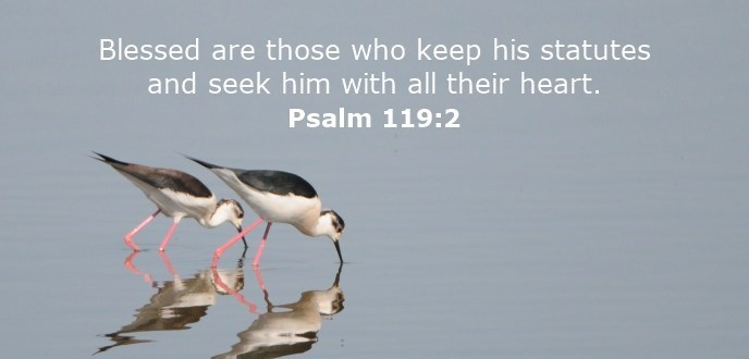 Blessed are those who keep his statutes and seek him with all their heart.