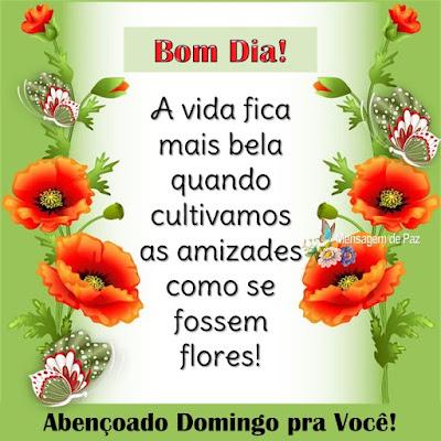 A vida fica mais bela quando cultivamos   as amizades como se fossem flores!  Bom Dia!  Abençoado Domingo pra Você!
