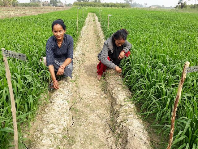 LAND BANKS Nepal