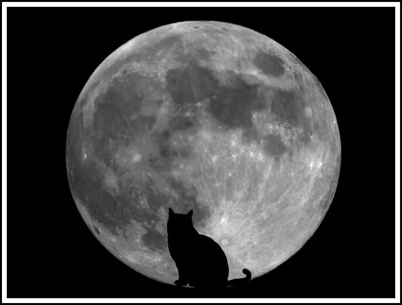 attraper le chat noir