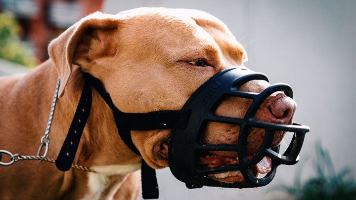 about pitbull puppies