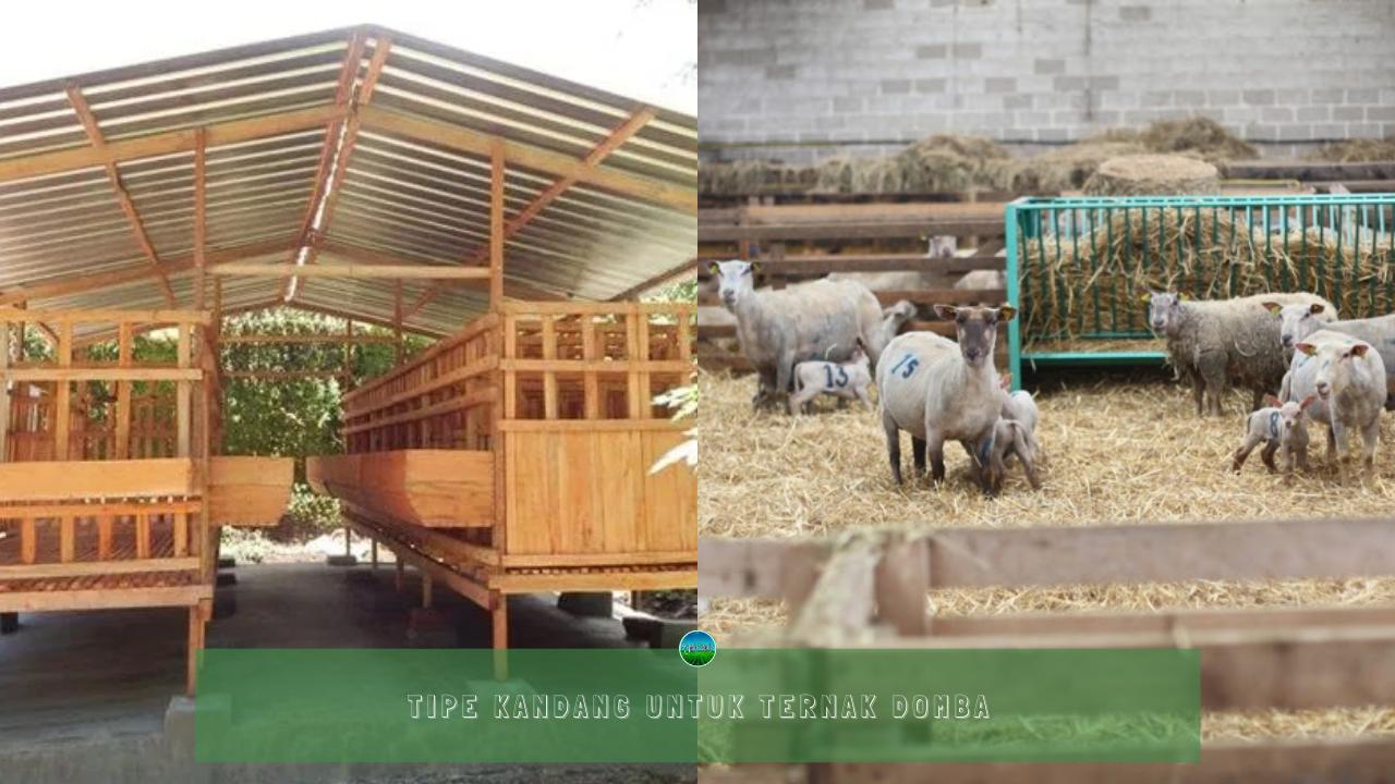 Tipe Kandang Ternak Domba