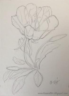 Tufted Evening Primrose, Pencil drawing ©2020 Tina M.Welter