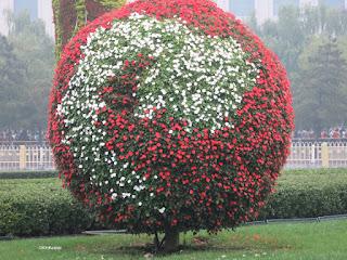 flowers, China