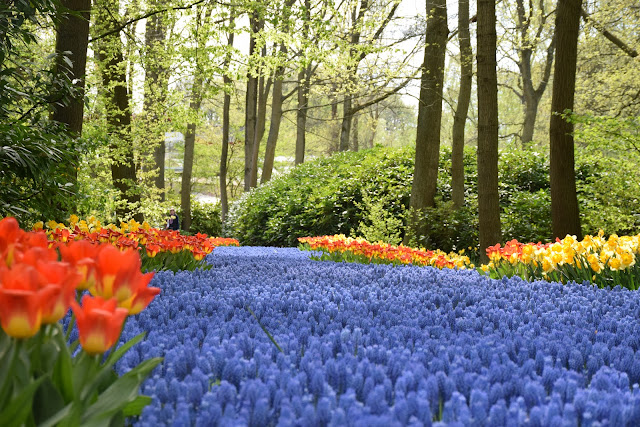 Kuekenhof, River of flowers