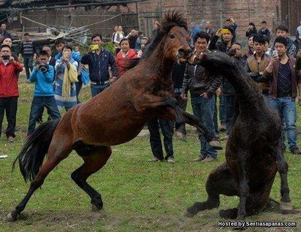 Miao Horse Festival - Winner