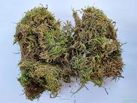 Sphagnum Moss Grass