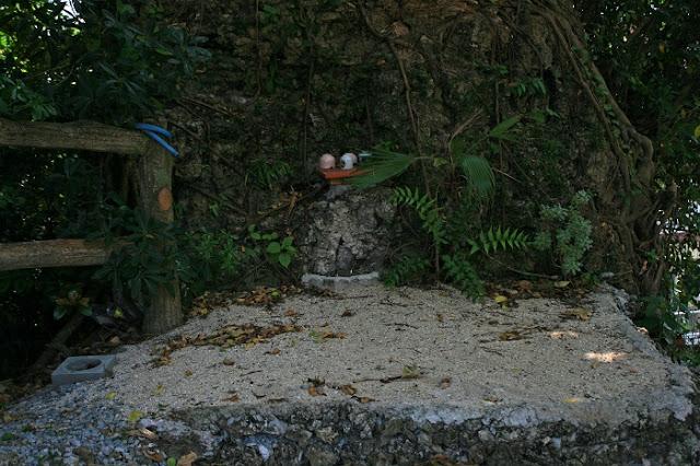 三文珠の写真