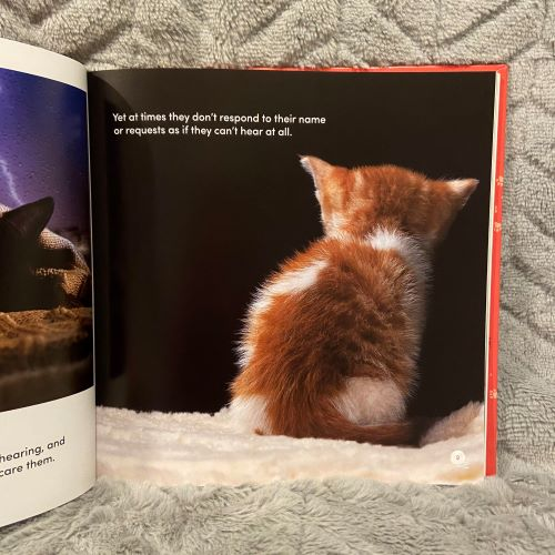 View of a Ginger kitten's back with words 'yet at times they don't respond to their name or requests as if they can't hear at all'
