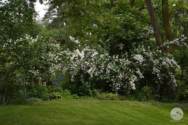 naturalne_ogrody_kwiatowe jak urzadzic