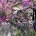 Motociclista muere al caerle encina un árbol, en Zamora