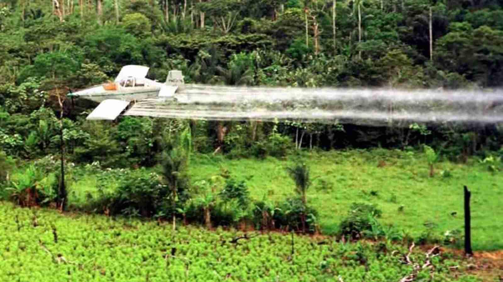 Regresan fumigaciones con glifosato: ambientalistas se pronunciaron