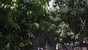 Isak Tangis dan Haru, Warnai Blusukan IMAN di Ambalawi