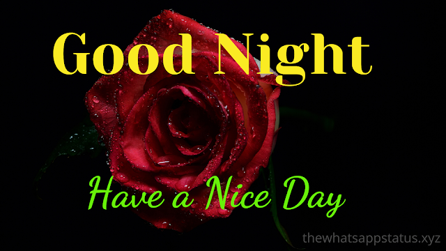 good night shayari in hindi 2020 (12)