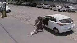 Εξωφρενικό βίντεο, με μια γυναίκα να κατεβάζει από το αυτοκίνητό της τον κουτσό σκύλο της και να τον παρατάει, ενώ εκείνος δεν μπορεί να τρ...