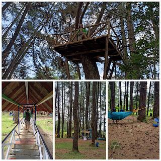 Kawasan wisata Pinus ecopark